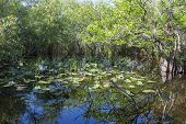 Everglades Swamp Park In Florida