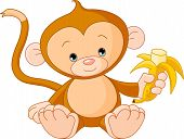 picture of baby-monkey  - Vector Illustration of baby Monkey eating banana - JPG