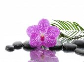 Macro of orchid and set of stones with palm on wet