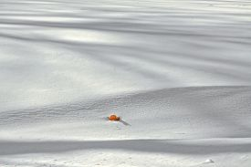 stock photo of blanket snow  - A blanket of newly fallen snow with shadows and a single Fall leaf - JPG