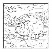 foto of yaks  - Coloring book  - JPG