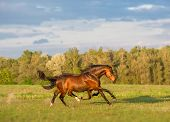 stock photo of wild horse running  - brown horse with the eight legs is running - JPG