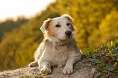 image of pity  - Pitiful Looking Ginger Dog Outdoor on Green Background - JPG