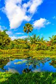 picture of rainforest  - Little pond in tropical rainforest with lotus flowers - JPG