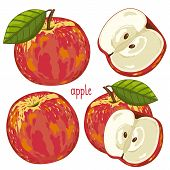 Постер, плакат: Apple isolated Vector