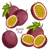 Постер, плакат: Passion Fruit Isolated Vector