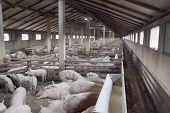 stock photo of pig-breeding  - Small Pig Farm for breeding little hogs - JPG