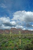 foto of superstition mountains  - saguaro cactus in arizona with superstition mountains sky and clouds - JPG