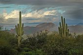 pic of superstition mountains  - saguaro cactus in arizona with superstition mountains sky and clouds  - JPG