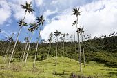 Cocora Walley And Wax Palm