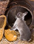 Exploring Bunny
