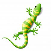 foto of lizard skin  - Vector illustration of a gecko - JPG