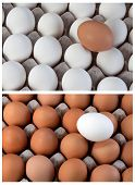 White And Brown Eggs Collage Duality, Visible Minority