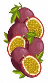 Постер, плакат: Passion Fruit isolated Vector composition