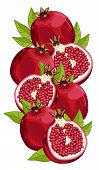 Pomegranate isolated, Vector, composition. poster