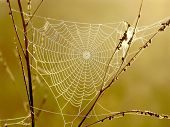 Spider web in the early morning