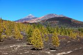 Tenerife volcano landscape. Arenas Negras dramatic volcanic scenery with Teide and Pico Viejo in the background.