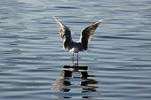 Nice Sea Gull Sloce Up