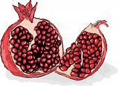 Red Ripe Pomegranate, A Piece Of Pomegranate. Juicy Pomegranate Seeds. Still-life From Fruit. Hand D poster