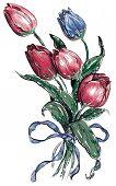 Tulip illustration