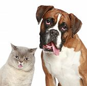 Cat And Dog, Close-up Portrait