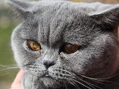 lady cat