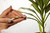 Female Hand Are Hugging Wilthered Leaf Of A Green Plant On The White Background. World Compassion Da poster