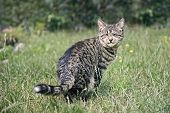 Blind Tabby Cat Sitting On A Meadow And Sunbathing. poster