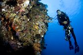 Diver with Camera by Coral Wall