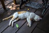 Cute Domestic Cat Sleeping On Wooden Deck Floor. Light Beige Kitty Nap In Outdoor Veranda Or Terrace poster