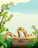 foto of anaconda  - Illustration of a snake on tree in green nature - JPG