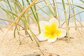 Flower And Beach Grass