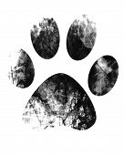 pic of paw-print  - grunge paw print on a white background - JPG