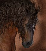 Equine Horse Greeting Card / Wall Art