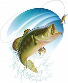 stock photo of spawn  - Largemouth bass is catching a bite and jumping in water spray - JPG