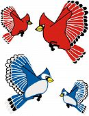 Blue Jay And Cardinal