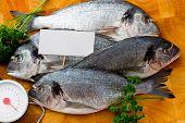 Seafood, fish - fresh sea dorada with price tag