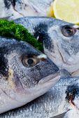 Mariscos, pescados - mariscos frescos dorada en cocina, comida sana