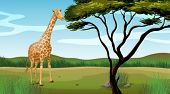 Illustration of a giraffe standing alone