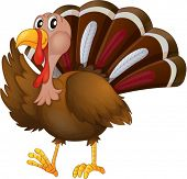 pic of spurs  - Illustration of a turkey on a white background - JPG