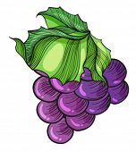 Illustration of a luscious grape on a white background
