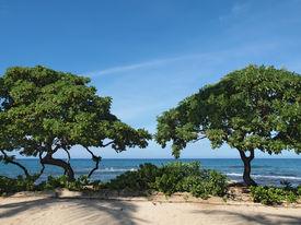 foto of heliotrope  - Heliotrope trees  - JPG