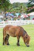 Nag Horse
