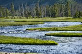 Yellowstone Wilderness