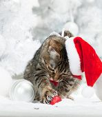 Christmas cat at red santa's hat  near christmas tree