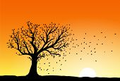 stock photo of blowing  - Autumn tree silhouette in sunset wind blowing away the falling leaves - JPG