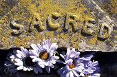 picture of headstones  - Close up detail of old grave headstone covered in yellow lichen with the word Sacred - JPG