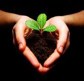 Pflanzen in Händen