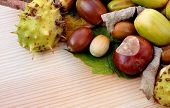 foto of cobnuts  - Cobnuts horse chestnuts acorns and autumn leaves form a diagonal border on a wooden background with copy space - JPG