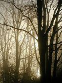 Misty Morning Light